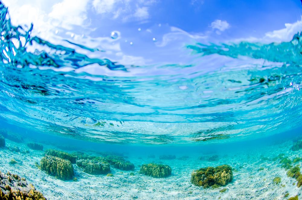 屋久島でダイビング